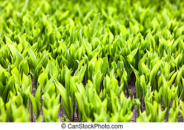 printemps, clair, herbe, vert