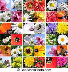 printemps, collage.