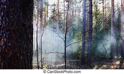 printemps, coucher soleil, forêt, fumée