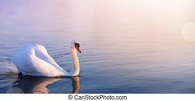 printemps, cygne blanc, lac