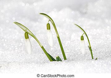 printemps, dernier, neige