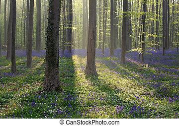 printemps, ensoleillé, forêt, jour