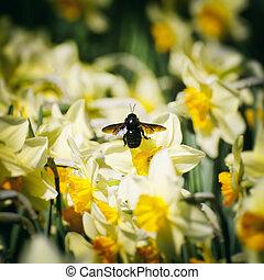 printemps, ensoleillé