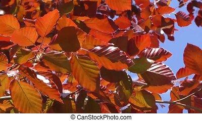 printemps, feuilles, arbre, bourgeonner