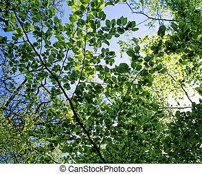printemps, feuilles