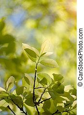 printemps, feuilles, season.