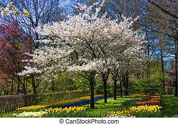 printemps, fleur, arbre, arrière-plan.