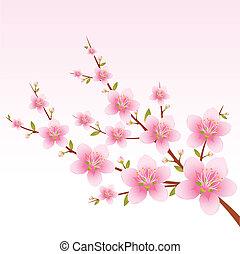 printemps, fleur
