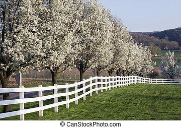 printemps, fleur, saison