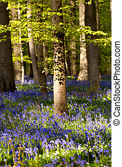 printemps, fleurir, forêt, campanules