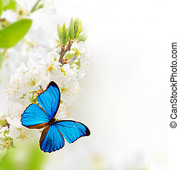printemps, fleurs, butterfly.