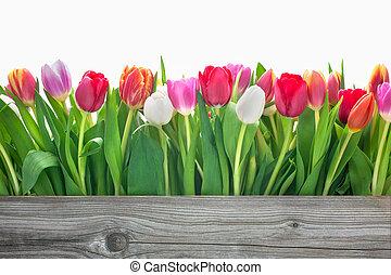 Printemps, fleurs, tulipes