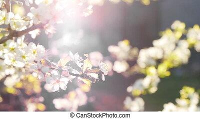 printemps, floraison, branches, fond, arbre