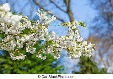 printemps, flowers., fond