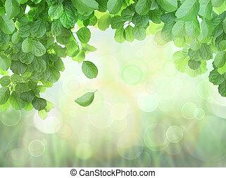 printemps, fond, à, feuilles, et, bokeh, effet