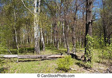 printemps, forêt, temps