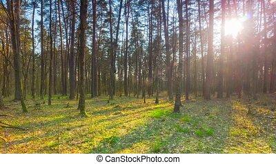 printemps, forêt, timelapse, panoramique