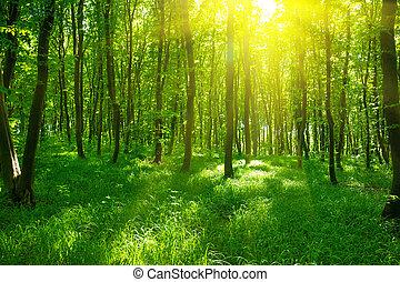 printemps, forêt, vert, lumière soleil, temps