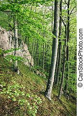 printemps, forêt verte, lumière soleil
