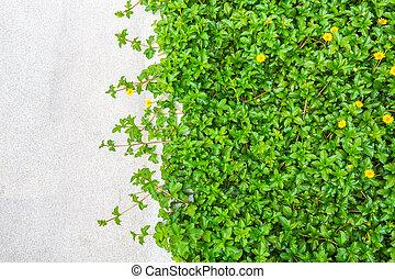 printemps, frais, herbe verte, rocher