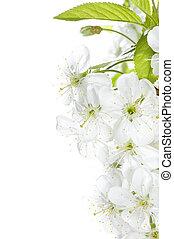 printemps, frontière, fleurs