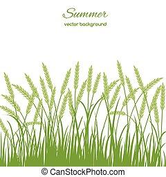 printemps, herbe, carte
