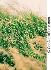 printemps, herbe, coucher soleil