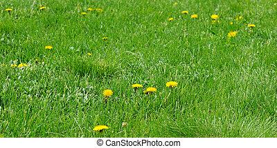 printemps, herbe, pissenlit, vert