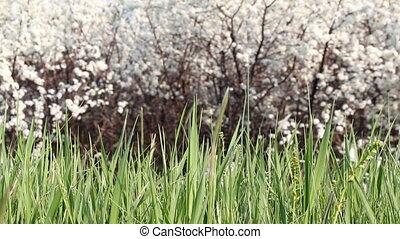 printemps, herbe, vert, scène