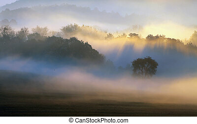 printemps, humide, arbres, brouillard, mouillé, forêt, brume