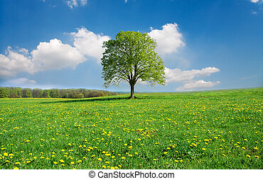 printemps, idyllique, paysage