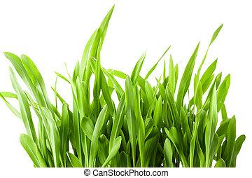 printemps, isolé, arrière-plan vert, frais, blanc, herbe