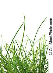 printemps, isolé, arrière-plan., vert, frais, blanc, herbe