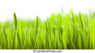 printemps, isolé, o, vert, frais, herbe