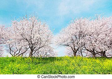 printemps, japonaise, scenics