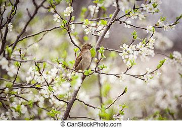 printemps, jardin, séance, moineau, arbre, fleurir