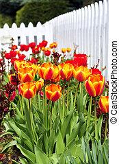 printemps, jardin, tulipes