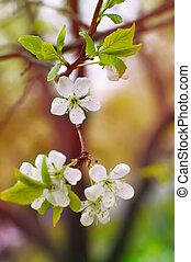 printemps, jeune, fleurs