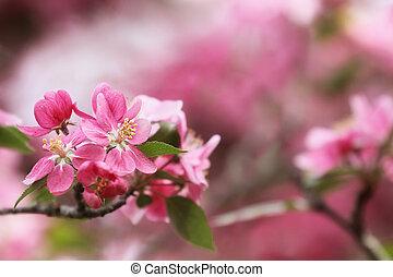 printemps, joli, fleurs
