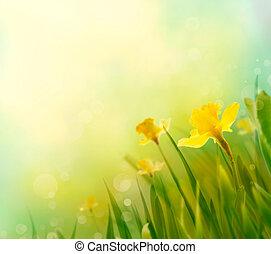 printemps, jonquille, fond