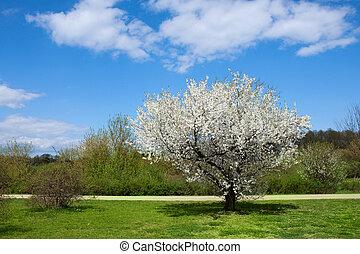 printemps, lanscape