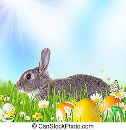 printemps, lapin