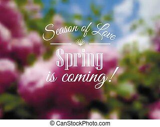 printemps, lilas, fond, bllured