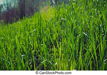 printemps, lumière, ciel, defocused, fond, soleil, herbe