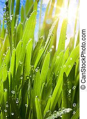 printemps, naturel, arrière-plan vert