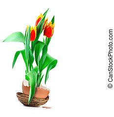 printemps, oeuf de pâques, tulipes