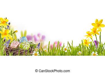 printemps, oeufs, paques, pré, coloré