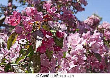 printemps, orchidée, arbres, fleurir
