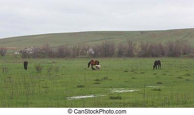 printemps, paître, field., animaux familiers
