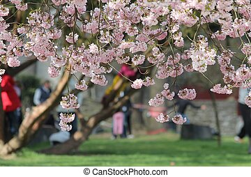 printemps, parc, jour
